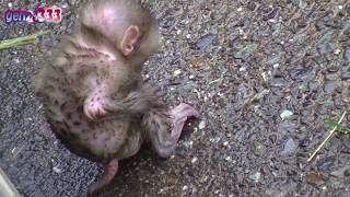 Download Baby monkey scared Video