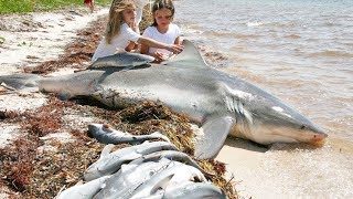 Download Wonderful Women Help Shark Giving Birth To 20 Baby On The Beach Video