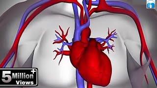Download हृदय कैसे कार्य करता है? (How the Heart Works in Hindi) Video
