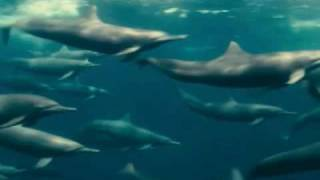 Download Oceans - Accompanying dolphins - Galatée Films 2009 | ESA Video