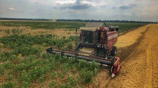 Download Полесье GS12 на заросшем поле пшеницы, уборка пшеницы #3 третье поле Video