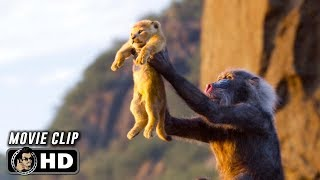 Download THE LION KING Clip - Circle of Life (2019) Disney Video