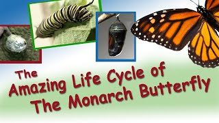 Download Amazing Life Cycle of a Monarch Butterfly Video