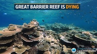 Download Australia's Great Barrier Reef is dying Video