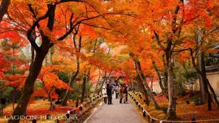 Download 京都秋艶 autumn colors momiji leaves in Kyoto Japan 紅葉 Video