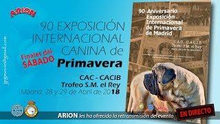Download 90 Exposición Internacional Canina de Primavera. Madrid 2018 Video