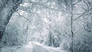 Download Blizzard Sounds for Sleep, Relaxation & Staying Cool | Snowstorm Sounds & Howling Wind in the Forest Video