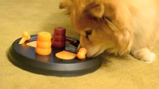 Download Bo Playing with the Dog Activity Flip Board by Trixie Video