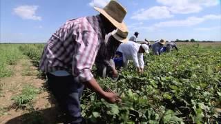 Download Arkansas Produce Farm - America's Heartland Video