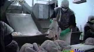 Download Agro Hoy - Producción de pavos y huevos en Chincha Video