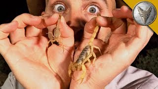 Download Which Scorpion STING is Worse?! Video