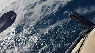 Download Great White Shark encounter whilst Kayak Fishing, Urunga, NSW, Australia Video