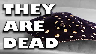 Download THEY ARE DEAD Video