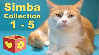 Download Cute Cat Collection | Bellboxes videos | Simba 1 - 5 Video