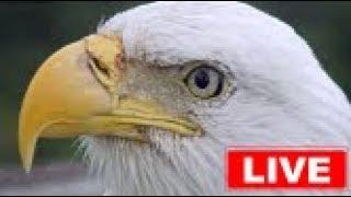 Download Southwest Florida Eagle Cam Video