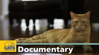 Download Cats through the ages: Domestication – episode 2 Video