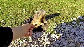 Download PARLO con una MARMOTTA (video DOLCISSIMO!) Video