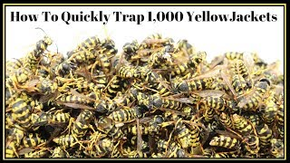 Download How To Quickly Trap 1,000 YellowJackets In Just Hours. Mousetrap Monday Video