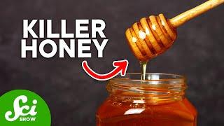 Download Honey: Bacteria's Worst Enemy Video