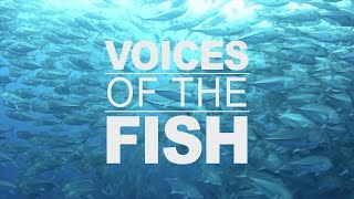 Download Voices of the Fish: Safeguarding ocean habitats - 3 of 4 Video