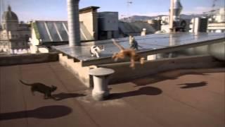 Download Go-Cat Freerunner Cat TV Advert Video
