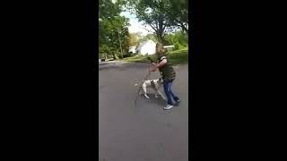 Download Pitbull saves owner from stray dog attack Video