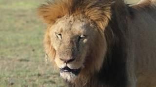 Download The Serengeti Tales II Video