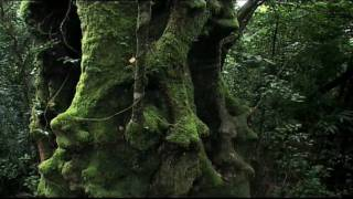 Download Rainforest: Beneath the Canopy Part 01 Video