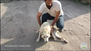 Download Rescuing a stray dog with broken back - Khatereh Video