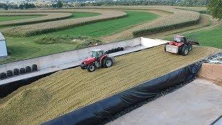 Download Corn Silage Harvest Begins | Filling the Big Bunk Video
