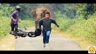 Download Stupid Humans vs Smart Wild Animals 3 Video