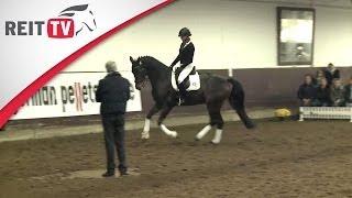 Download Das junge Pferd versammelt galoppieren - Jean Bemelmans in Hannover Teil 2d | Die Alten Meister Video