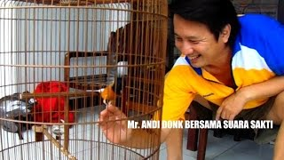 Download KISAH SUKSES : Mr. Andi Donk Orbitkan Murai Batu Suara Sakti Raih Rekor MURI Video