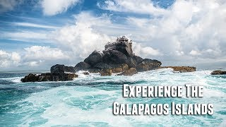 Download Experience The Galapagos Islands Video