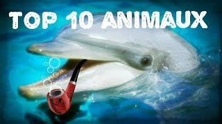 Download Top 10 des animaux les plus intelligents au monde Video