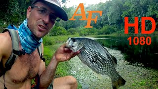Download Lure Fishing Video Jungle Perch Soft Plastic n Popper Fishing Whitsunday Islands Andysfishing EP.86 Video