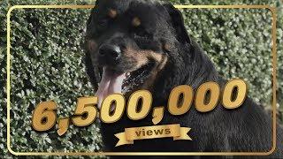 Download สัตว์ - ฟักกลิ้ง ฮีโร่ & We Are Lovely Pet l VRZO Video
