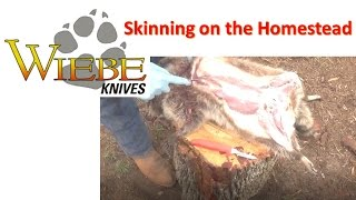 Download Wiebe Skinning Knives Video