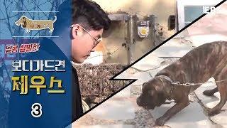 Download 세상에 나쁜 개는 없다 - 달콤 살벌한 보디가드견 제우스 #003 Video