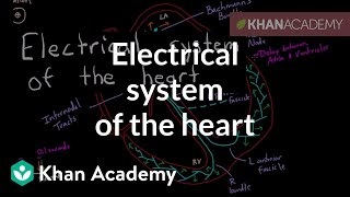 Download Electrical system of the heart   Circulatory system physiology   NCLEX-RN   Khan Academy Video