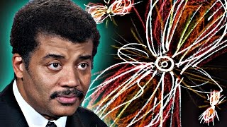 Download A Brief History of Everything, feat. Neil deGrasse Tyson Video