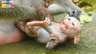 Download OMG! Why silly Dolly monkey doing seriously to newborn Brutus Jr like that pity baby|Monkey Daily781 Video