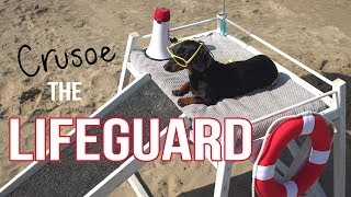 Download Ep 2: Crusoe the Dachshund Lifeguard - Funny Dog at the Beach! Video