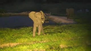 Download Djuma: Small herd of Elephants between pan and dam area - 18:46 - 02/22/19 Video