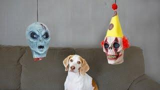 Download Dog vs. Severed Heads: Funny Dog Maymo Video