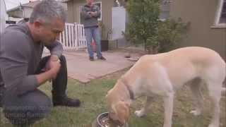 Download Why Did CESAR MILLAN Get Bite ? Video