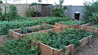 Download Secrets to a successfull urban garden with little work. Video