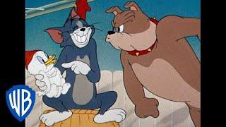 Download Tom & Jerry em Português   Compilação de Animações Clássicas   Tom, Jerry e Spike   WB Kids Video