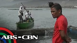 Download Industriya ng pagtitilapia sa Batangas apektado ng Taal eruption | TV Patrol Video