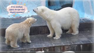 Download Тихий заговор медвежат против Герды Video